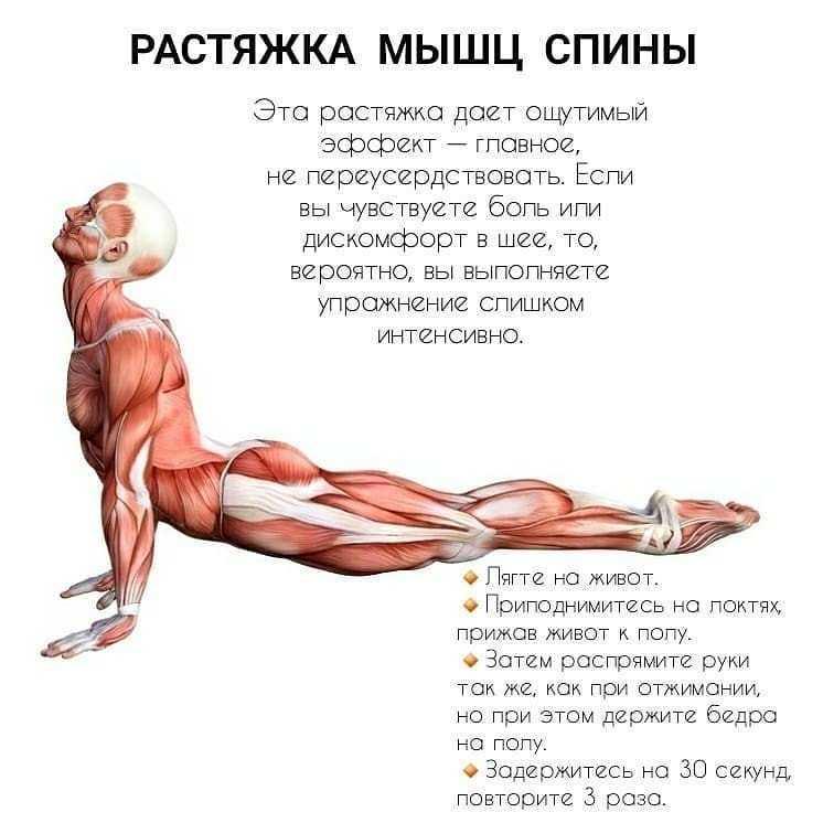 Растяжка мышц до и после тренировок - фото и видео