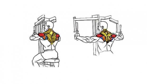 Разведение рук в тренажере: бабочка сидя для плеч и задней дельты