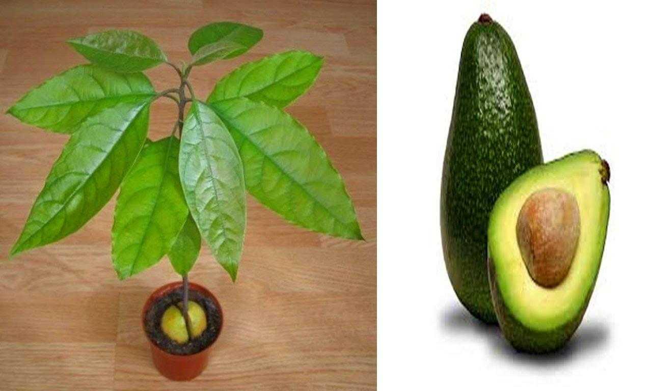 Какие витамины и минералы содержатся в авокадо?