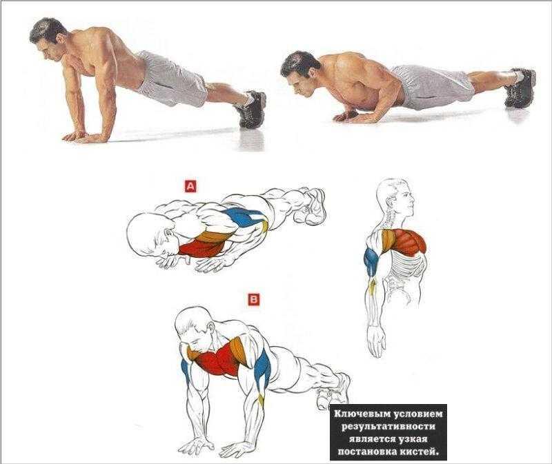 Польза отжиманий для женщин: что дает это упражнение и какие мышцы укрепляет?