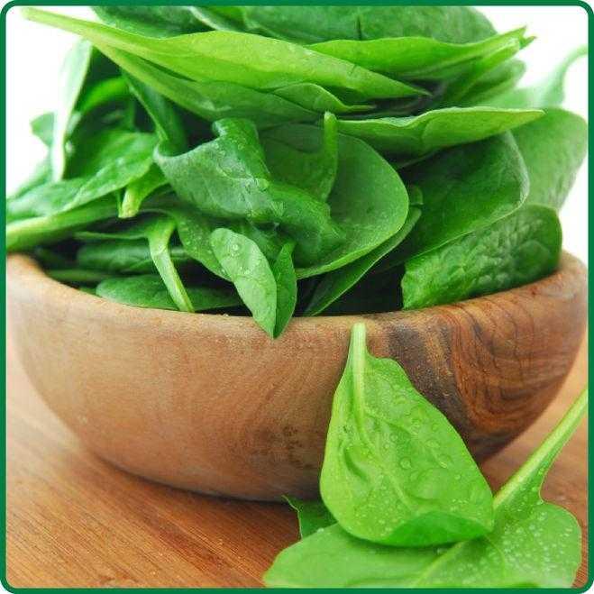 Польза и вред шпината для здоровья мужчин и женщин