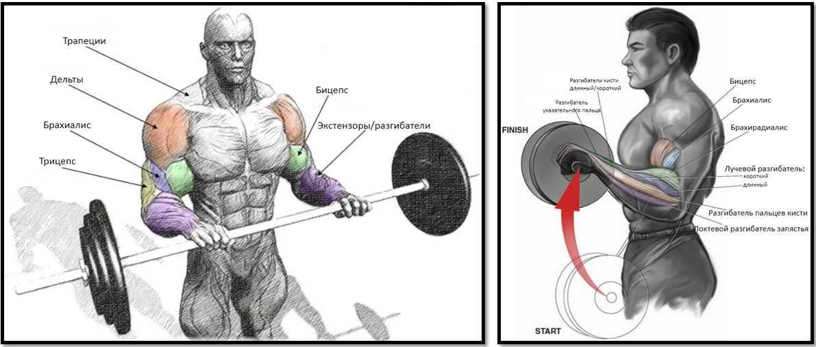 Комплекс упражнений на трицепс с гантелями для домашних условий | rulebody.ru — правила тела
