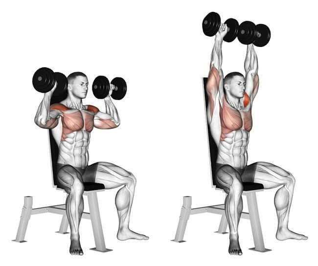 Жим тейта: техника и рекомендации по выполнению фитнес-упражнения