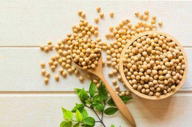 Как принимать соевый протеин при похудении и наборе массы