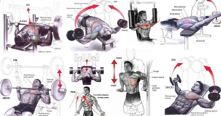 Отжимания на брусьях: какие мышцы работают, эффективная тренировка трицепсов