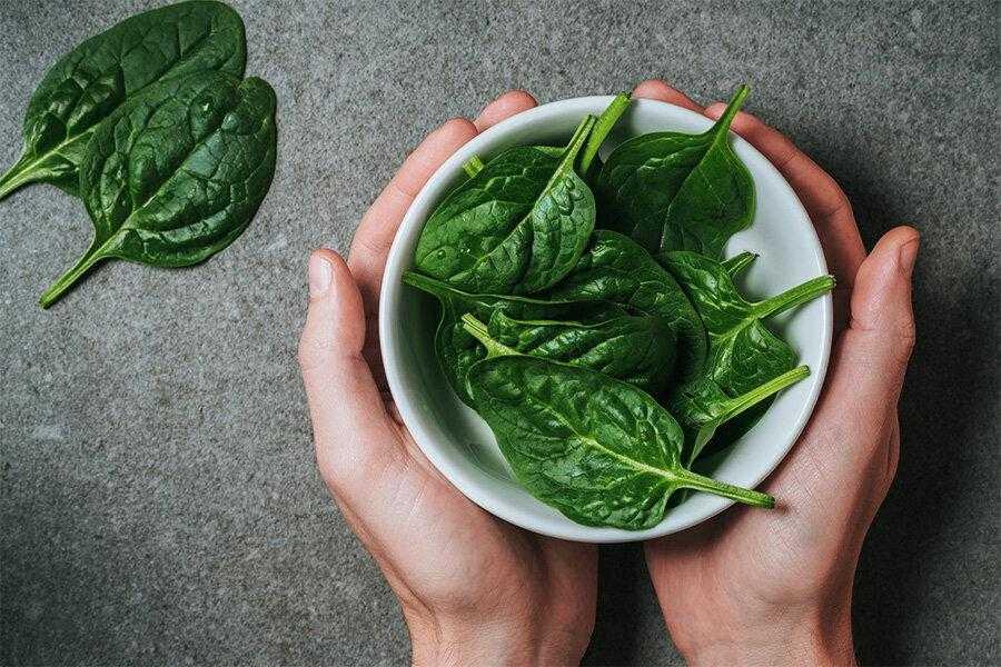 Шпинат - польза и вред для организма, противопоказания, рецепты
