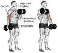 Растяжка всего тела: программа тренировок с упражнениями на гибкость и видеоуроки