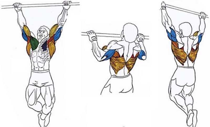 Как накачать спину: 5 программ тренировок