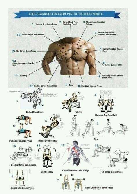 Человек-суперсет: программа на грудь и спину от арнольда шварценеггера - dailyfit