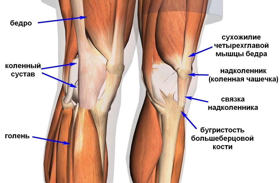 В чем эффект разгибания ног в тренажере - основные ошибки новичков и рекомендации профессионалов (155 фото)