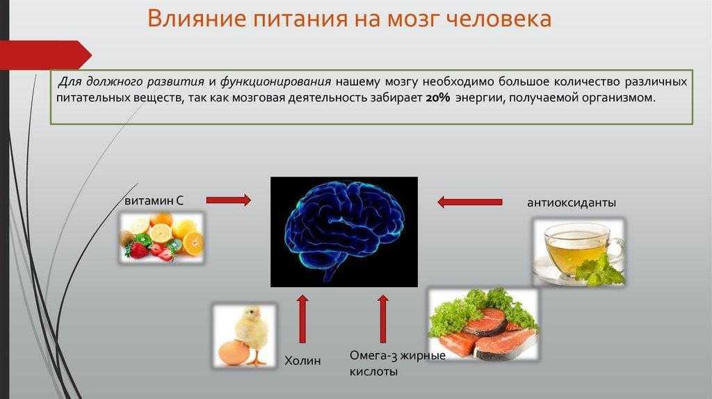 10 продуктов для кровообращения головного мозга, улучшающих память, а также какое питание запрещено при нарушениях