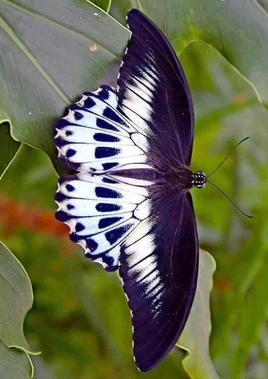 Упражнение бабочка: польза для женщин и мужчин