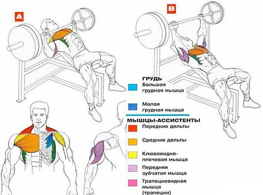Как накачать верхнюю часть грудных мышц –  комплекс упражнений | rulebody.ru — правила тела