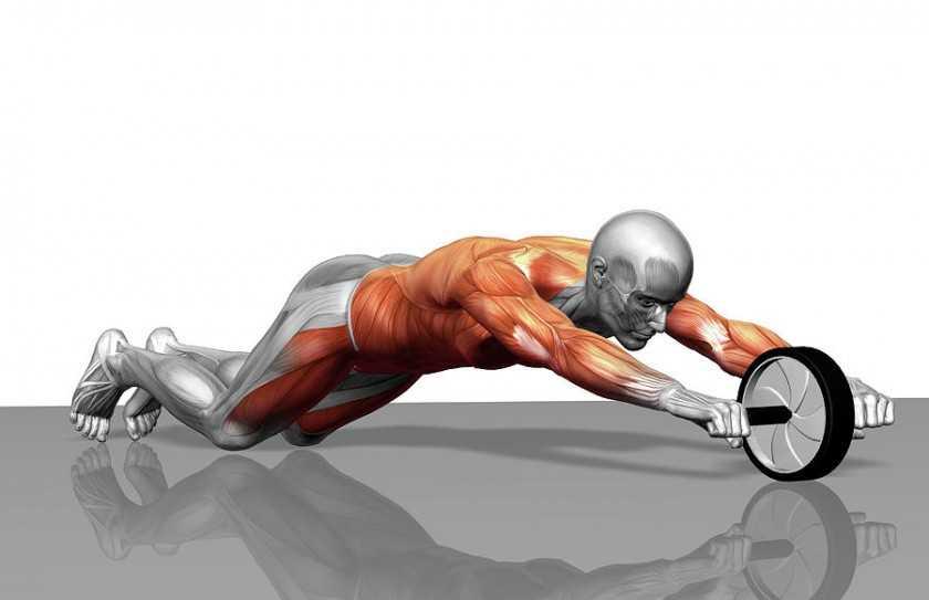 Комплекс упражнений с гимнастическим роликом