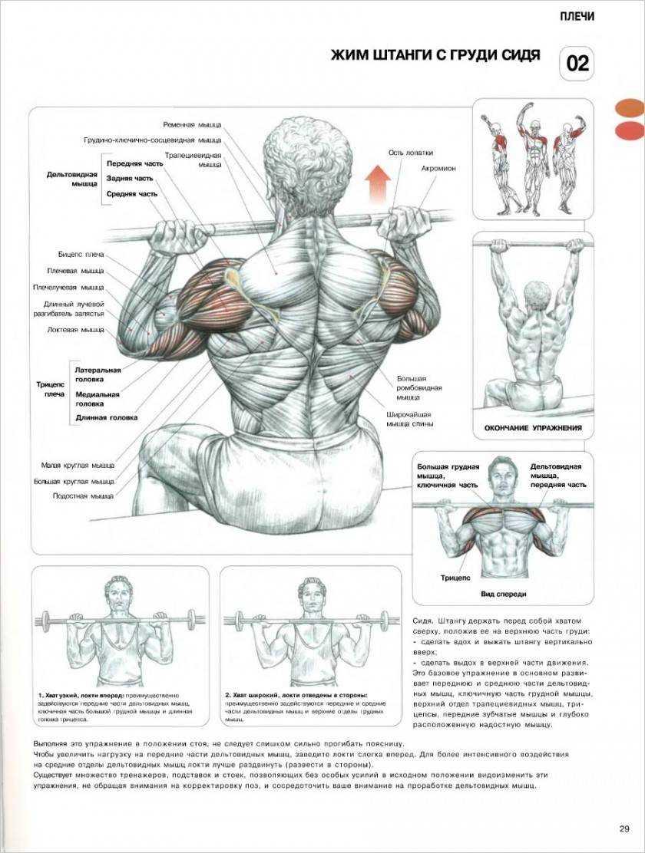 Растяжка плечевого пояса и трицепса: стретчинг-упражнения в картинках и с видео
