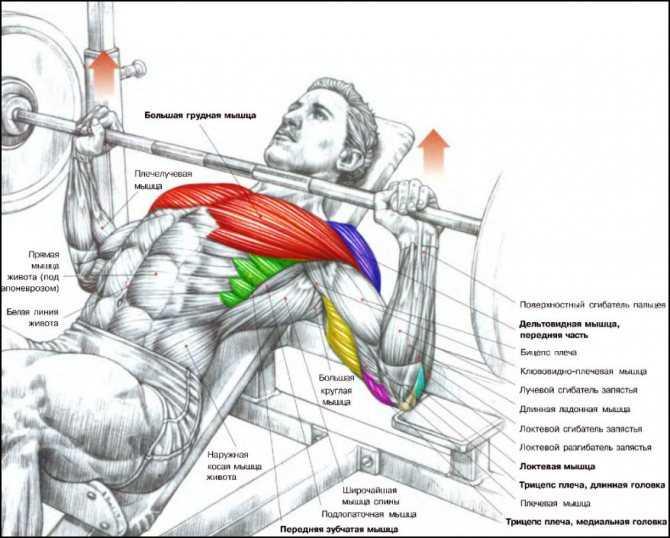 15 необычных упражнений с гирей на все группы мышц