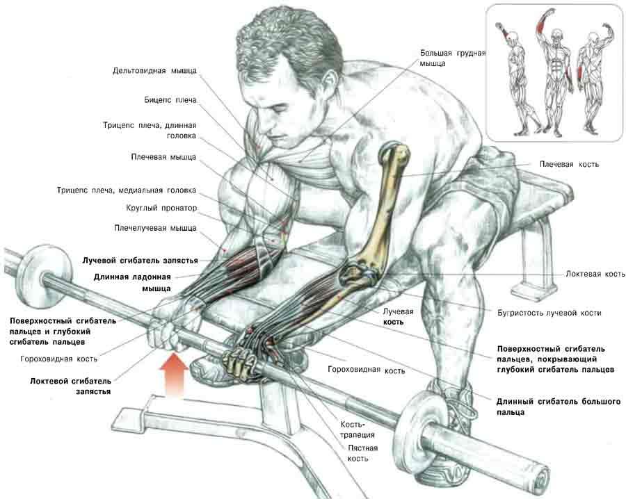 Армрестлинг тренировки: система упражнений для верха, рук, связок и кистей