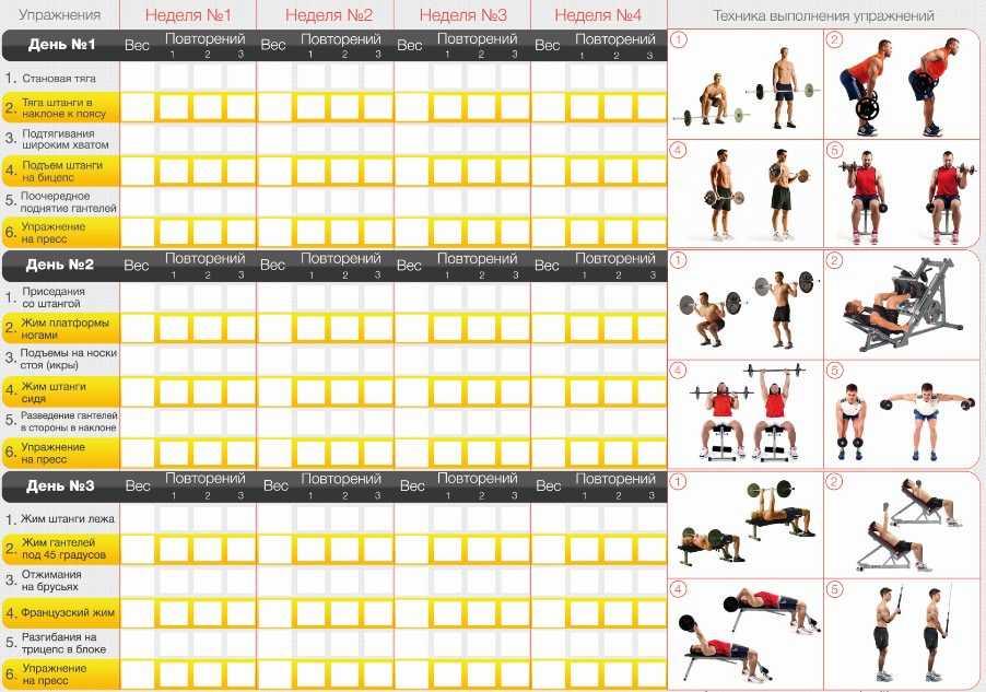 17 лучших упражнений для начинающих девушек на все группы мышц + план тренировок на 28 дней дома - womfitwomfit