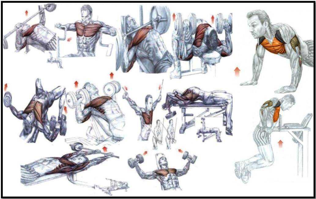 Отжимания на брусьях: какие мышцы работают, эффективная тренировка трицепсов | rulebody.ru — правила тела