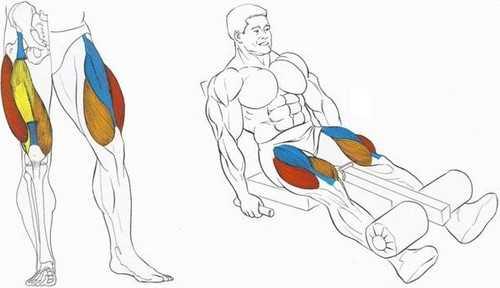 Разгибание ног в тренажере служит для проработки рельефа и формы четырехглавой мышцы бедра Техника выполнения упражнения и его правильное использование