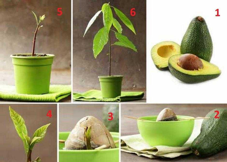 Топ 19 полезных свойств авокадо (+9 рецептов)