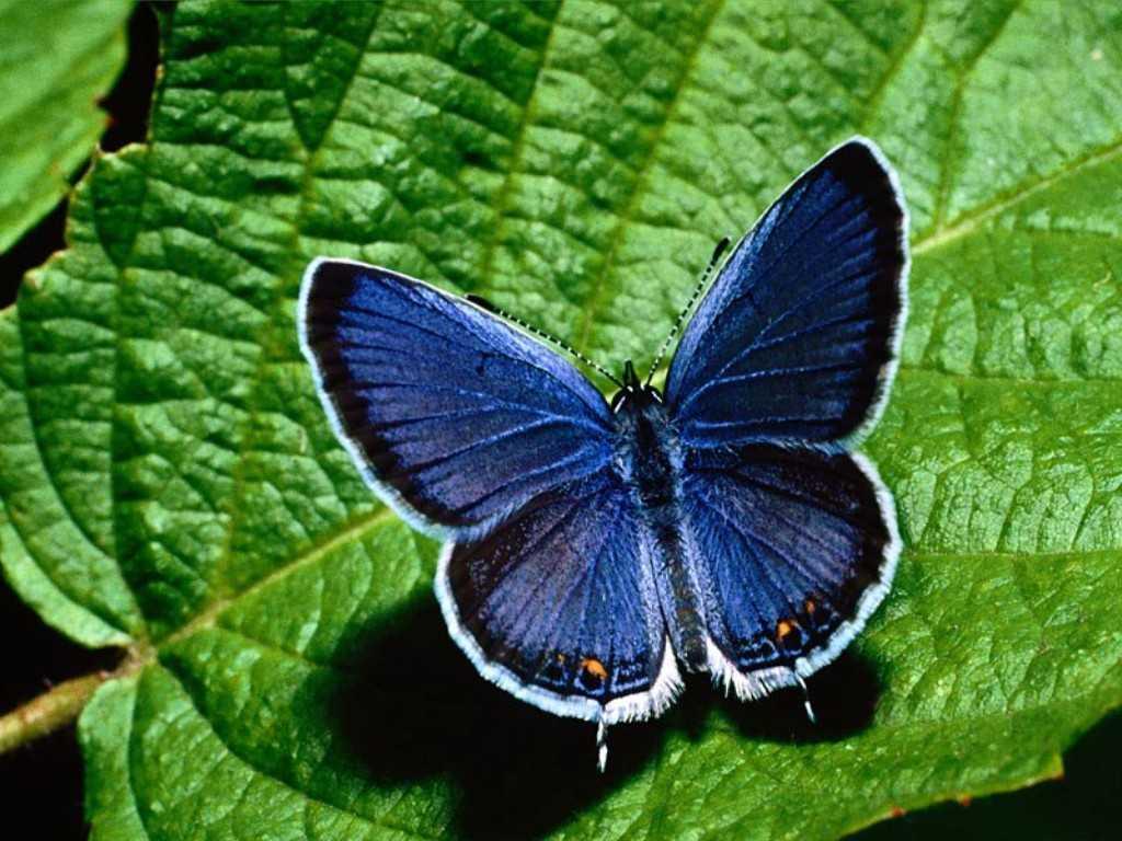 Развиваем грудь с упражнением «бабочка»