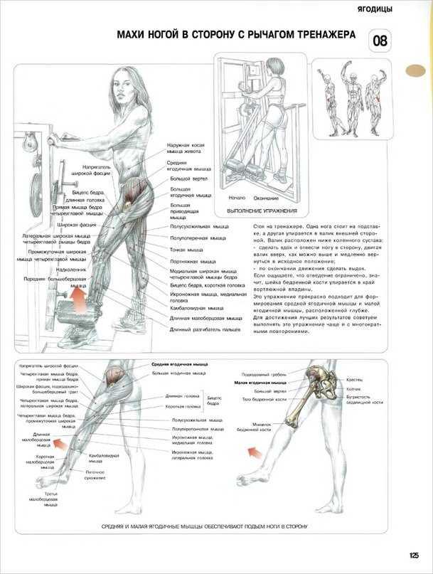 Упражнения для тренировки ягодичных мышц