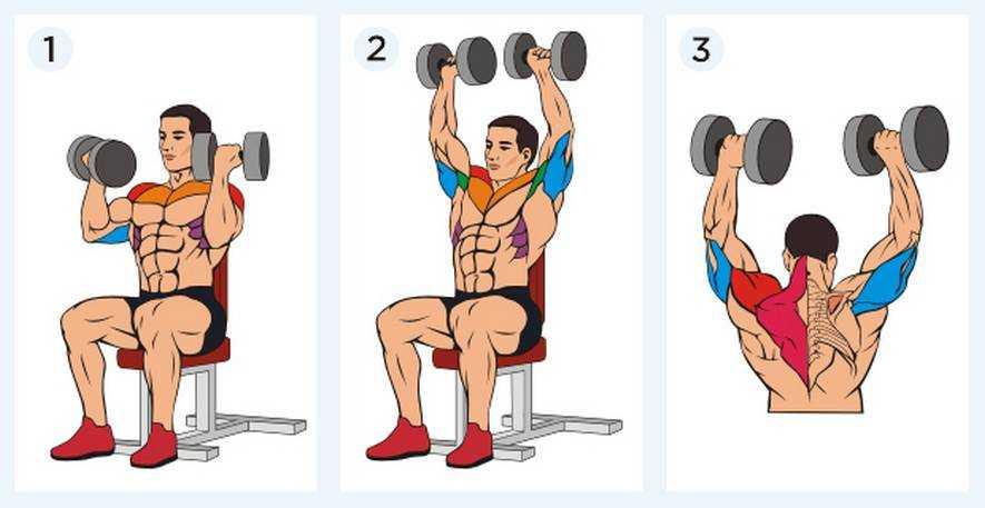 Жим по методике Джеймса Брэдфорда нагружает все три пучка дельтовидных мышц и способствует развитию мышц плечевого пояса Разбираем технику и важные нюансы