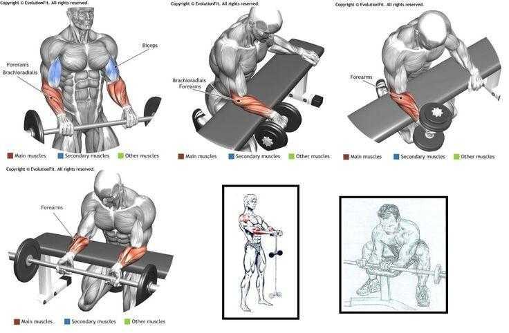 Тренировочный комплекс упражнений с гантелями для того, чтобы накачать бицепсы