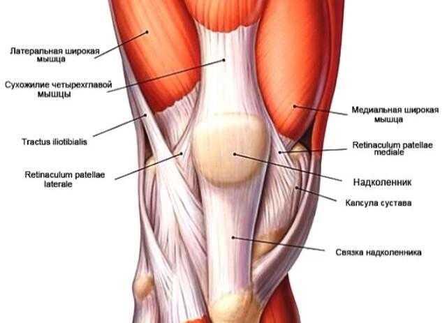 Болят колени при приседании на корточки: причины появления боли