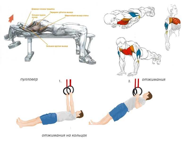 Упражнения на брусьях какие мышцы работают