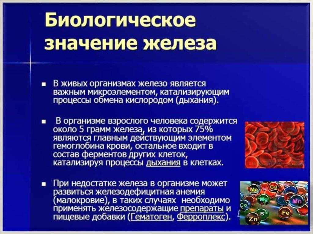 Потребность организма в железе. источники микроэлемента и суточная норма потребления