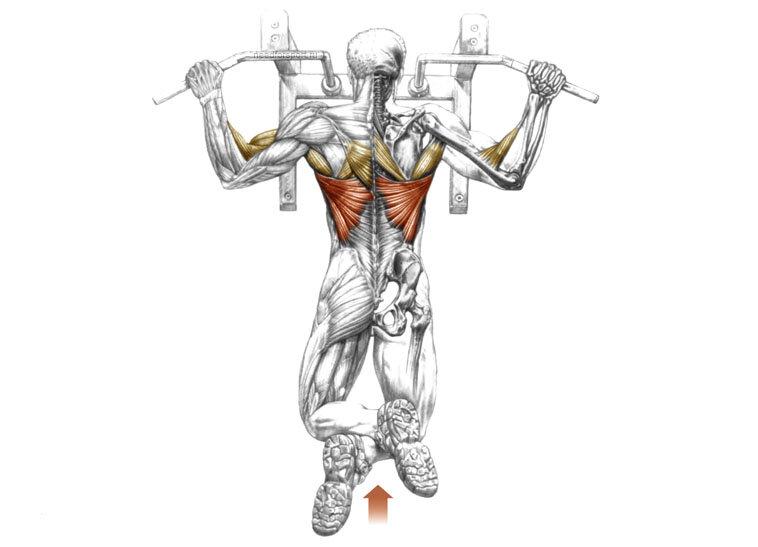 Подтягивания за голову: польза и техника выполнения упражнения