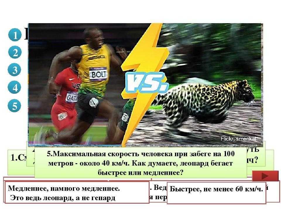 Скорость бега трусцой: какое среднее значение км в час
