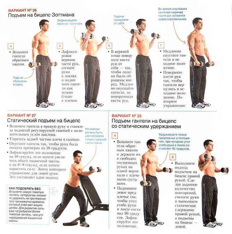 Упражнения на руки со штангой. бицепс, трицепс и предплечье.