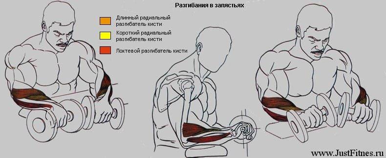 Как накачать предплечья в домашних условиях: гантелями, штангой