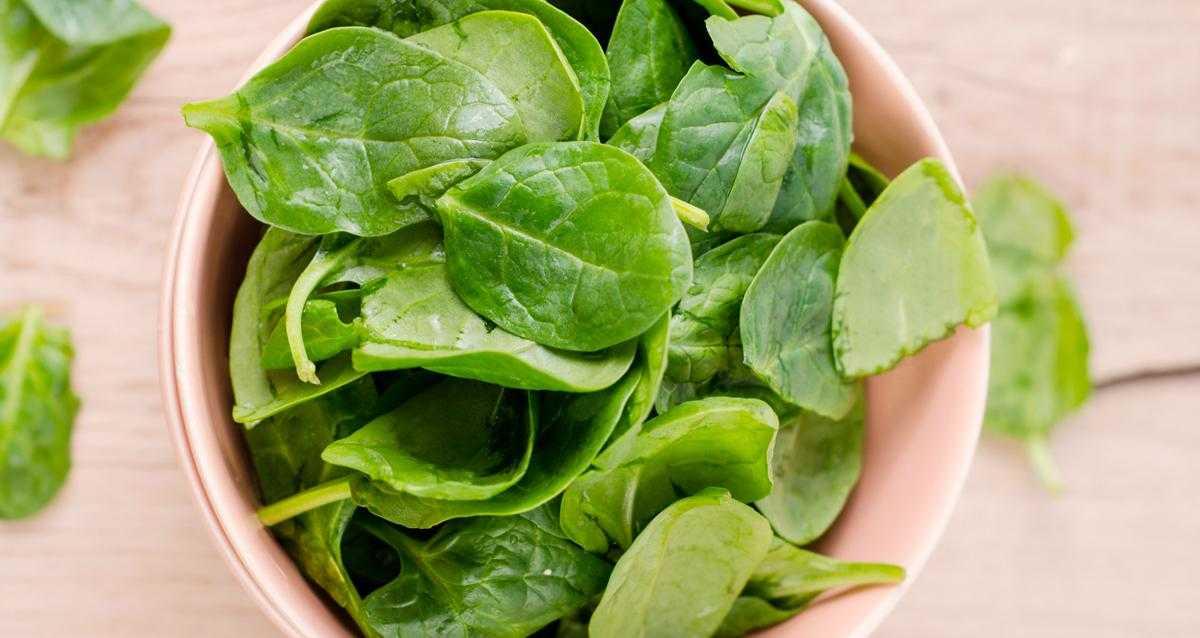 Шпинат: его польза и вред для организма. рецепты приготовления блюд из шпината