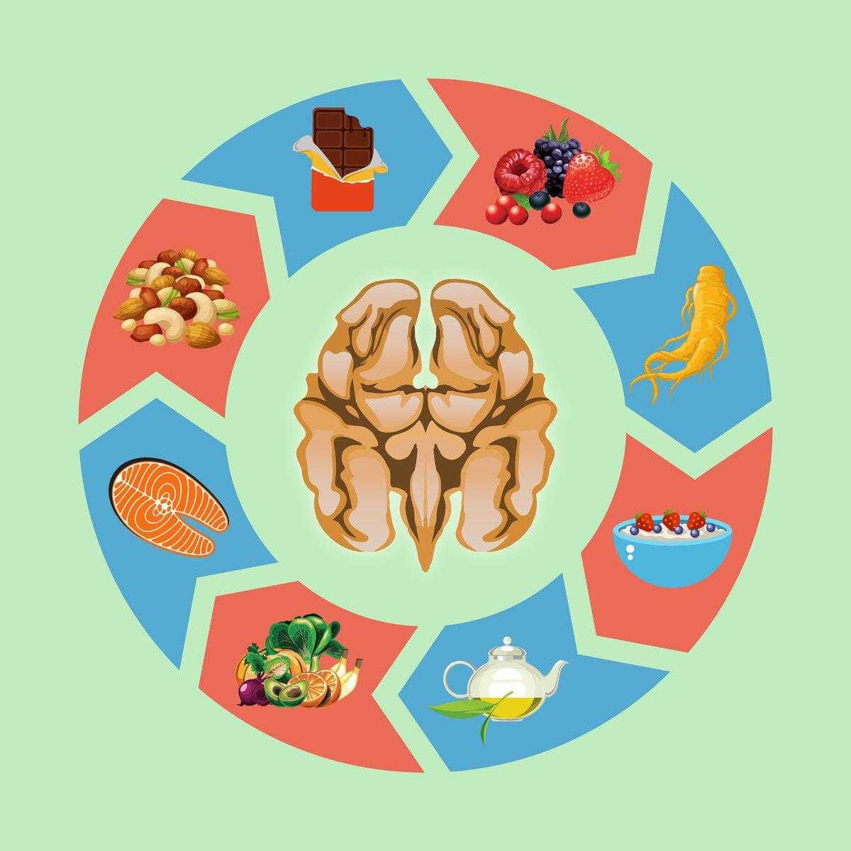Какие продукты питания улучшают мозговое кровообращение — топ 10