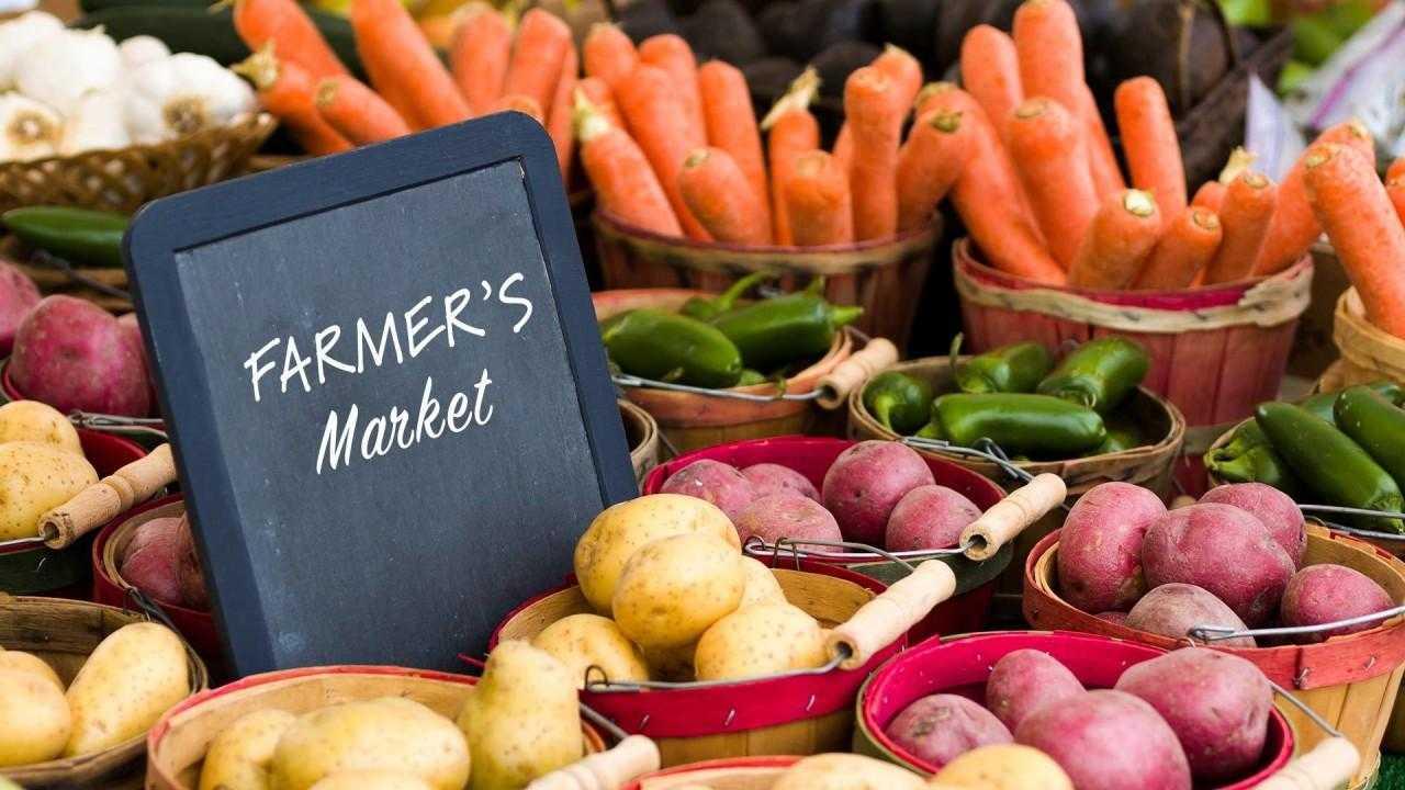 Выращивание овощей как бизнес с нуля в 2020 году. как сделать бизнес урожайным
