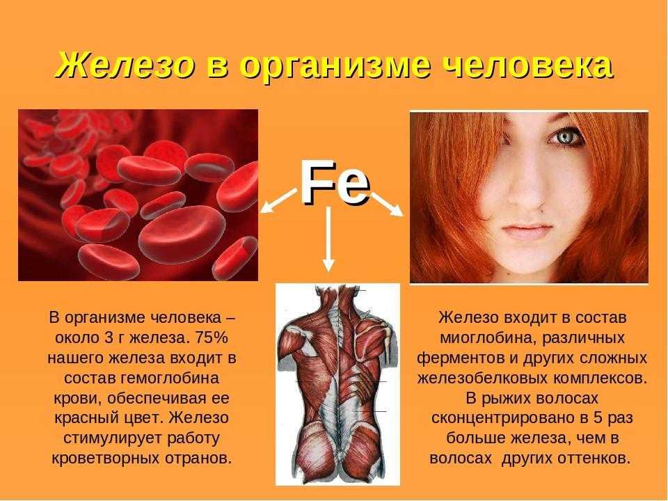 Нехватка и дефицит железа в организме, полезные свойства железа