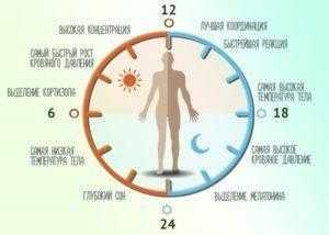 Влияние режима питания, режима сна и бодрствования на циркадные ритмы | |