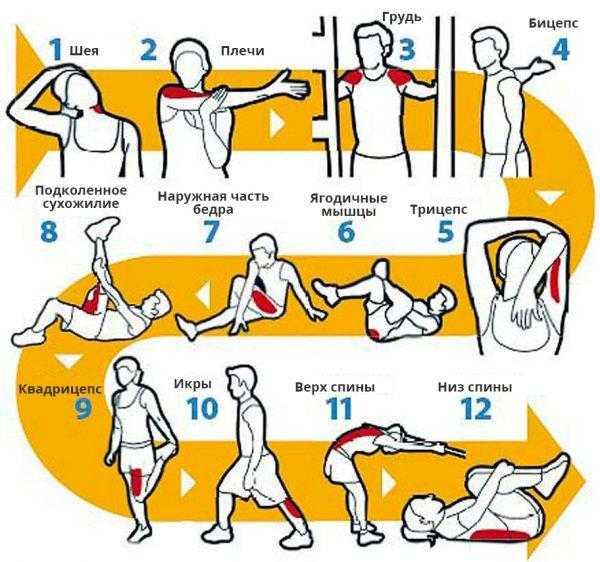 Разминка перед силовой тренировкой и правильная заминка после тренинга