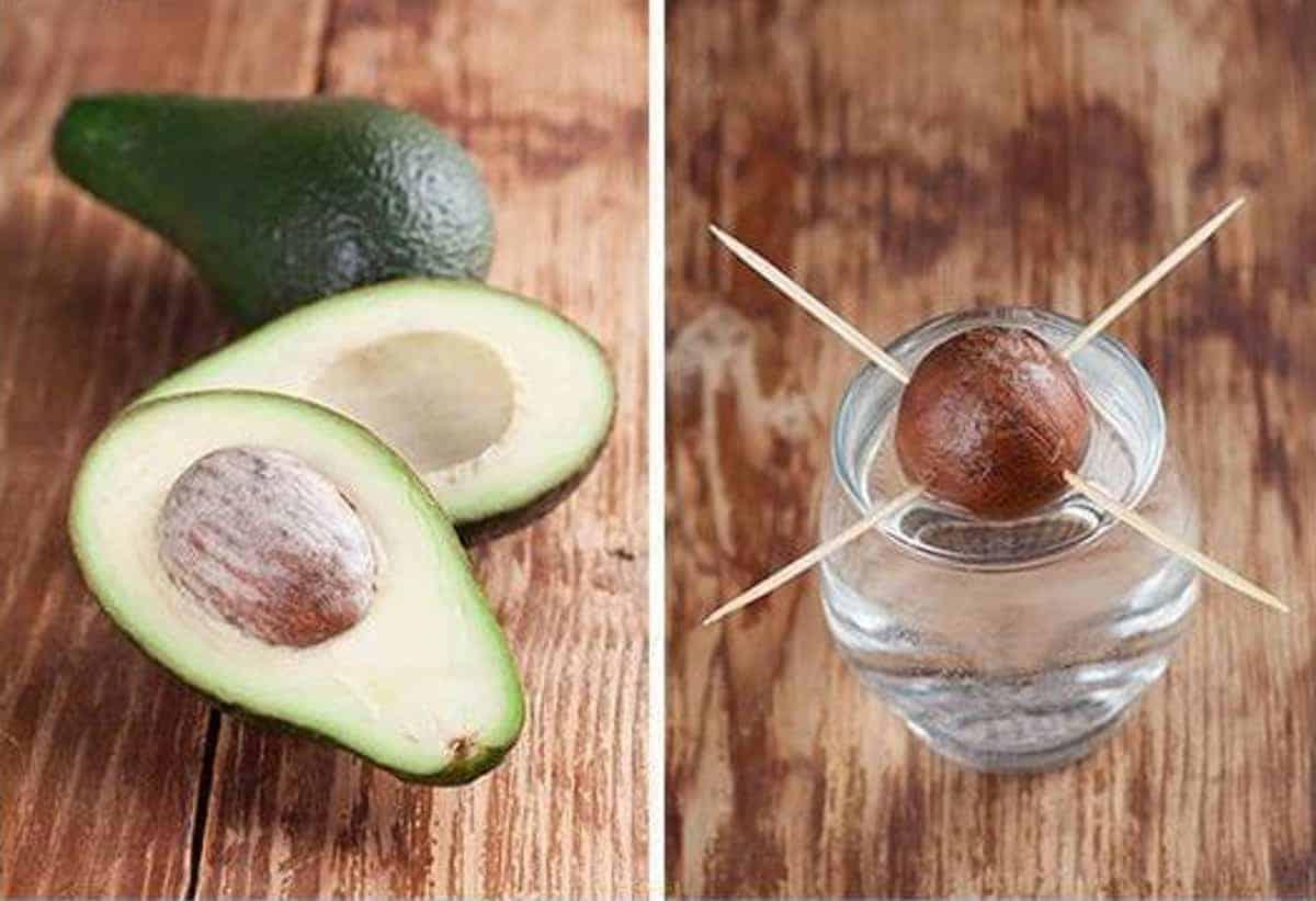 Чем полезен авокадо — как его едят и выбирают