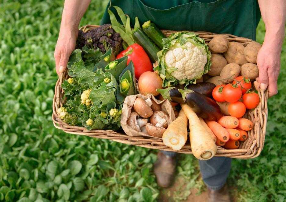 Сбалансированное питание для похудения гербал   независимый партнер herbalife