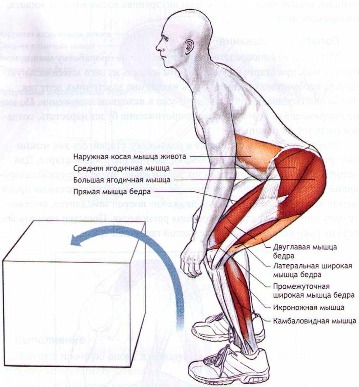 Какие мышцы будут работать при беге — разбираемся в анатомии