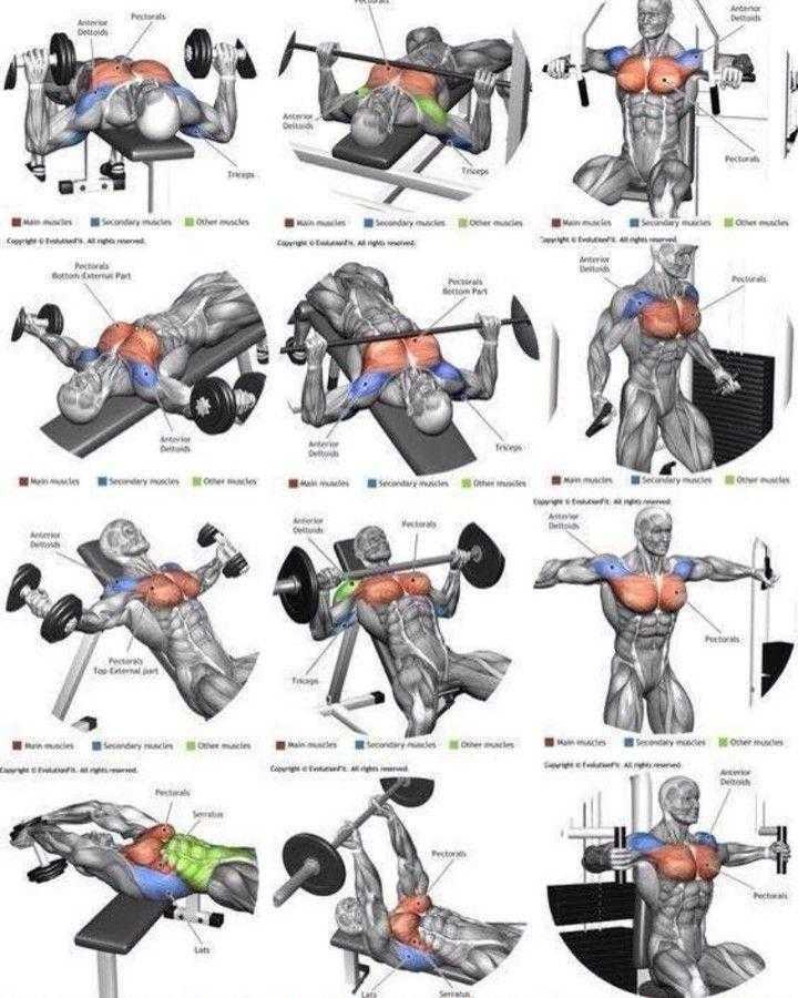 Как накачать грудные мышцы гантелями?