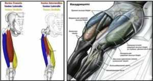 Жим ногами в тренажере: техника выполнения и виды постановки ног