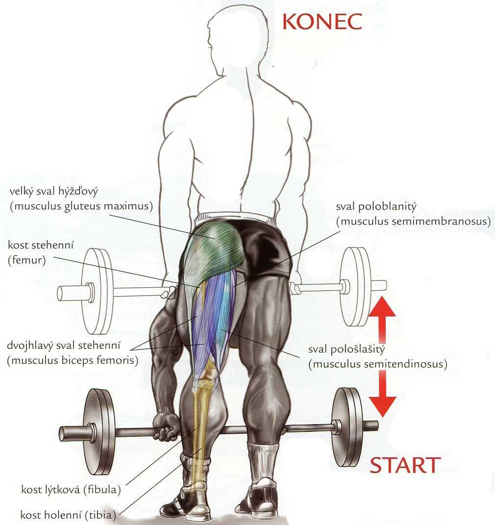 Как нужно выполнять упражнение - становая тяга