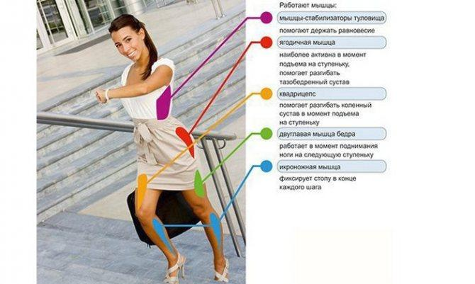 Какие мышцы работают при ходьбе пешком: прокачай тело к лету!