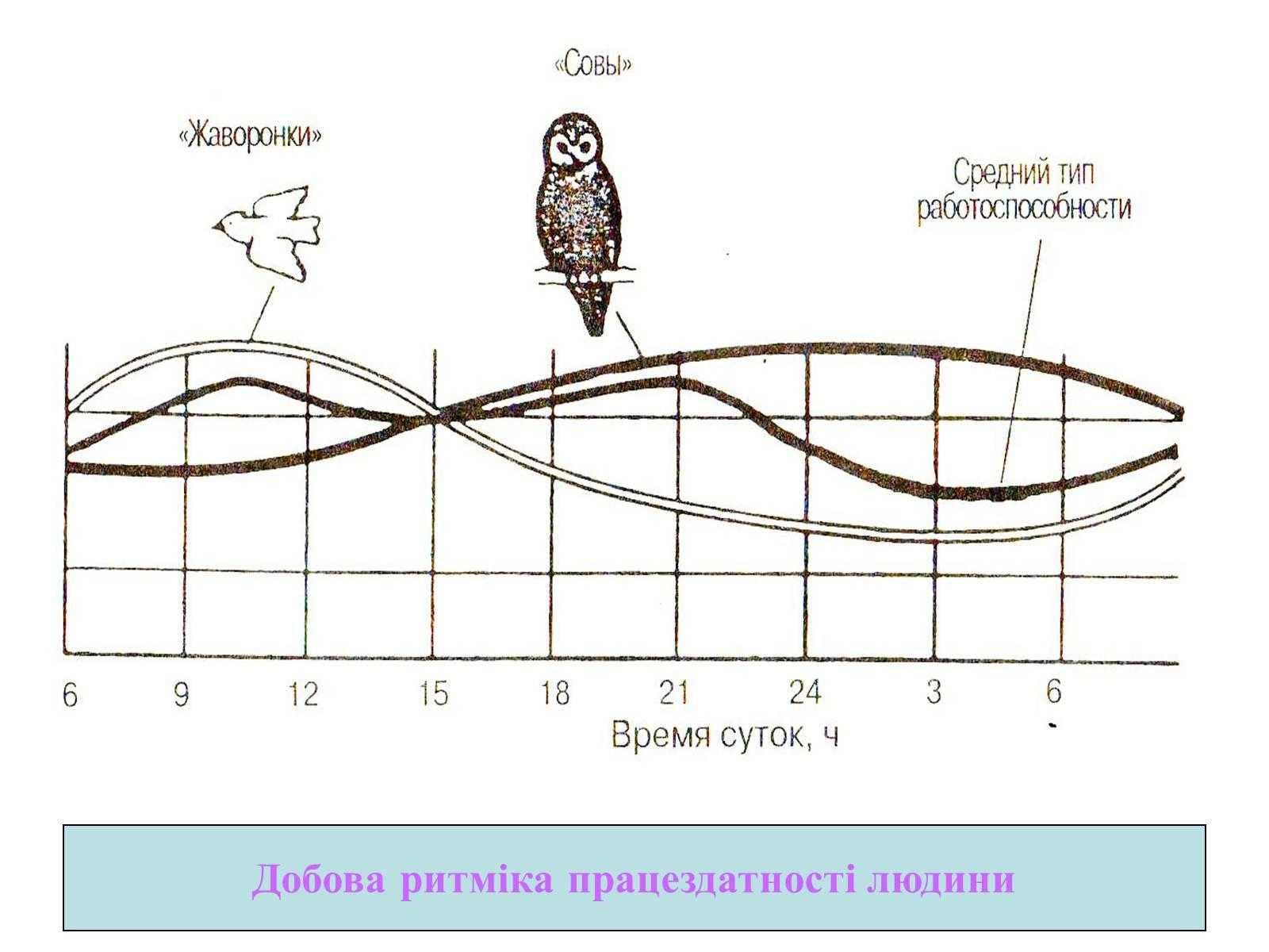 Биологические часы: что нужно знать? - hi-news.ru